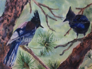 Chattering Stellar Jays Watercolor Painting