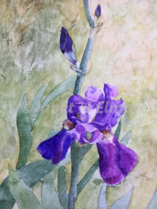 Iris Bud Watercolor Painting