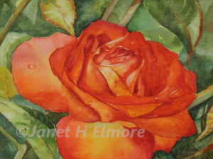 Amazing Rose Watercolor Painting